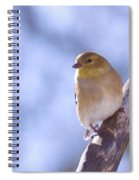 Chickie Chickie Spiral Notebook