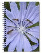 Chicory For Three Spiral Notebook