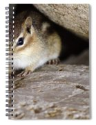 Chipmunk In Danger Spiral Notebook