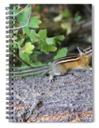 Chipmunk On A Log Spiral Notebook