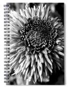 Chrysanthemum In Monochrome Spiral Notebook