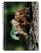 Cicada - Third In Series Spiral Notebook