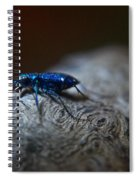 Cicindellidae A Family Of Preditors Spiral Notebook