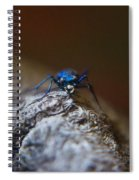 Cicindellidae Face To Face Spiral Notebook