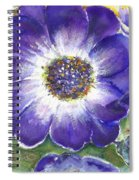 Cineraria Of South Africa  Spiral Notebook