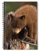 Cinnabun Spiral Notebook