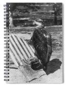 Civil War: Eagle Mascot Spiral Notebook