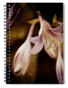 Cladis 04s Spiral Notebook