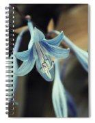 Cladis 22 Spiral Notebook