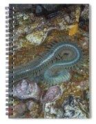 Clam Worm Spiral Notebook