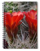 Claret Cup Duo Spiral Notebook