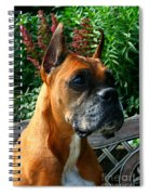 Classic Boxer Spiral Notebook