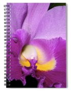Classic Purple Orchid Spiral Notebook