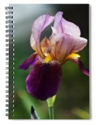 Classic Purple Two-tone Dutch Iris Spiral Notebook