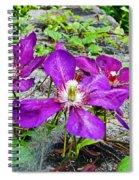 Clematis Abby Aldrich Rockefeller Garden Spiral Notebook