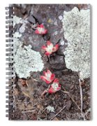 Cliff Lettuce Spiral Notebook