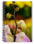 Climbing Slowly Spiral Notebook