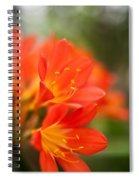 Clivia In The Conservatory Spiral Notebook