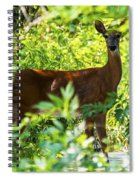 Close Eye Spiral Notebook