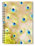 Close Up Of A Peacock Tail Spiral Notebook