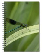 Close-up Of Dragonfly Perched On Leaf Spiral Notebook