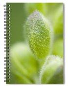 Close-up Of Flower Buds Spiral Notebook