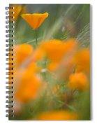 Close Up Of Orange Poppy Flowers Spiral Notebook