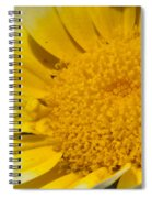 Close Up Of The Inside Of A Yellow And White Sun Flower Spiral Notebook