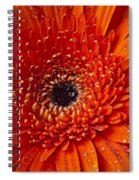 Close Up Orange Mum Spiral Notebook