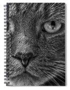 Close Up Portrait Of A Cat Spiral Notebook