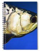 Closeup Of A Fish Spiral Notebook