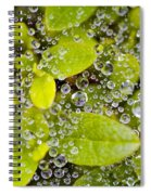 Closeup Of Morning Dew On Leaves Spiral Notebook