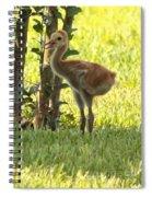 Closeup Of Sandhill Baby Spiral Notebook