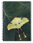 Closeup Of Unique Butterfly Spiral Notebook