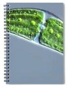 Closterium Lunula Spiral Notebook