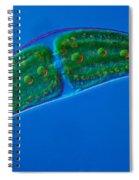 Closterium Sp. Algae Lm Spiral Notebook