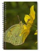 Clouded Sulphur Butterfly Din099 Spiral Notebook
