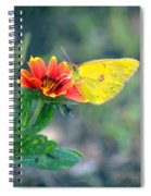 Clouded Sulphur Butterfly Square Spiral Notebook