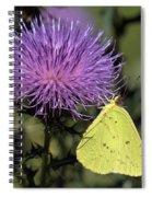 Cloudless Sulphur Butterfly Din159 Spiral Notebook