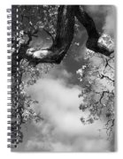 Cloudy Oak Spiral Notebook