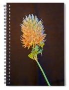 Clover Aglow 6 Spiral Notebook
