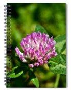 Clover Craze Spiral Notebook