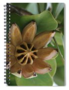 Clusia Major -  Autograph Tree Spiral Notebook