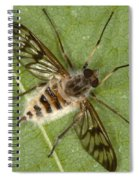 Cluster Fly Killed By Parasitic Fungus Spiral Notebook