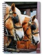 Clydesdale Closeup Spiral Notebook
