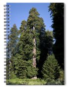 Coast Redwood Spiral Notebook
