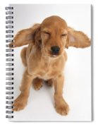 Cocker Spaniel Puppy Making A Face Spiral Notebook