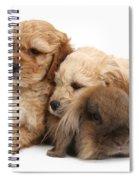 Cockerpoo Puppies And Rabbit Spiral Notebook
