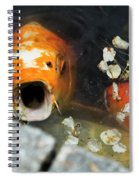 Cocky Catskills Koi Spiral Notebook