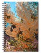 Collare Butterflyfish Spiral Notebook